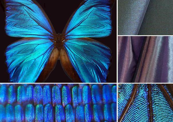 blogMOdacad-biomimetica---Morphotex--29-0