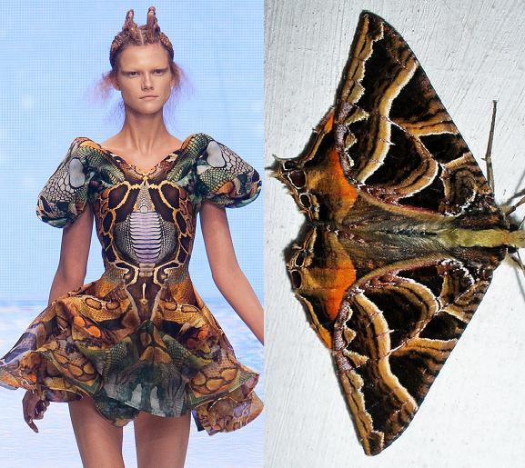 blogModacad--biomimetica-borboleta-3